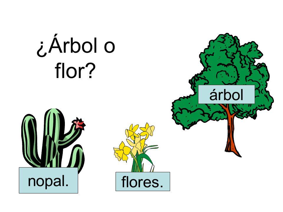 ¿Árbol o flor? flores. árbol nopal.