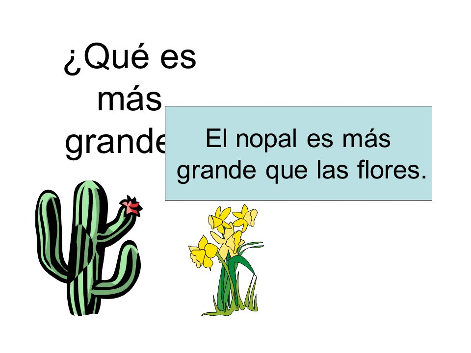 ¿Qué es más grande? El nopal es más grande que las flores.