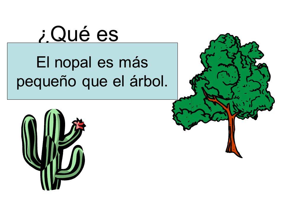 ¿Qué es más pequeño? El nopal es más pequeño que el árbol.