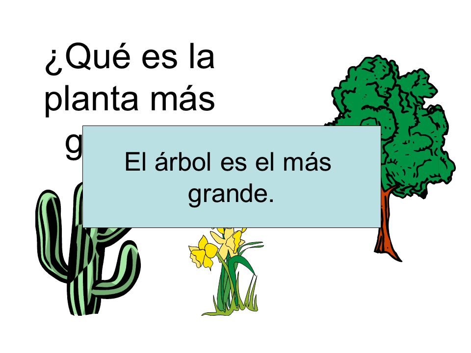 ¿Qué es la planta más grande? El árbol es el más grande.
