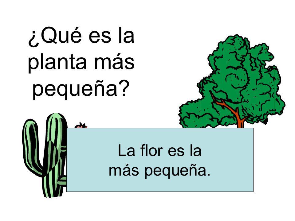 ¿Qué es la planta más pequeña? La flor es la más pequeña.