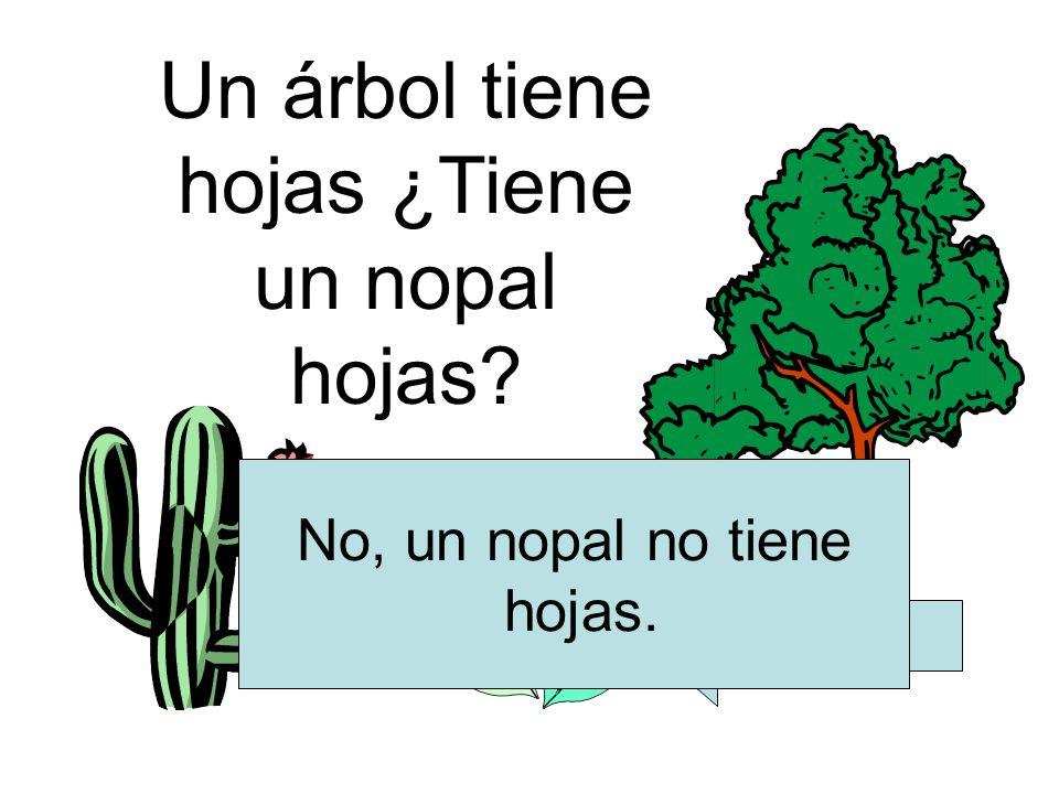 Un árbol tiene hojas ¿Tiene un nopal hojas? hojas No, un nopal no tiene hojas.