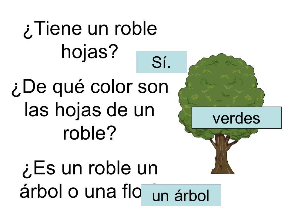 ¿Tiene un roble hojas? ¿De qué color son las hojas de un roble? ¿Es un roble un árbol o una flor? Sí. verdes un árbol