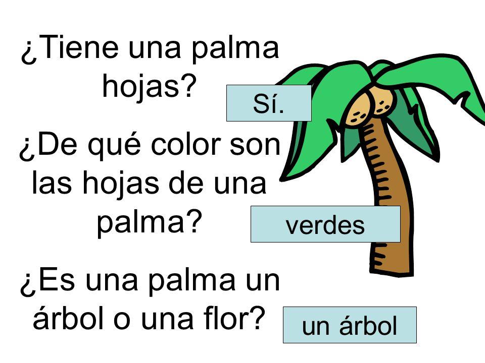 ¿Tiene una palma hojas? ¿De qué color son las hojas de una palma? ¿Es una palma un árbol o una flor? Sí. verdes un árbol