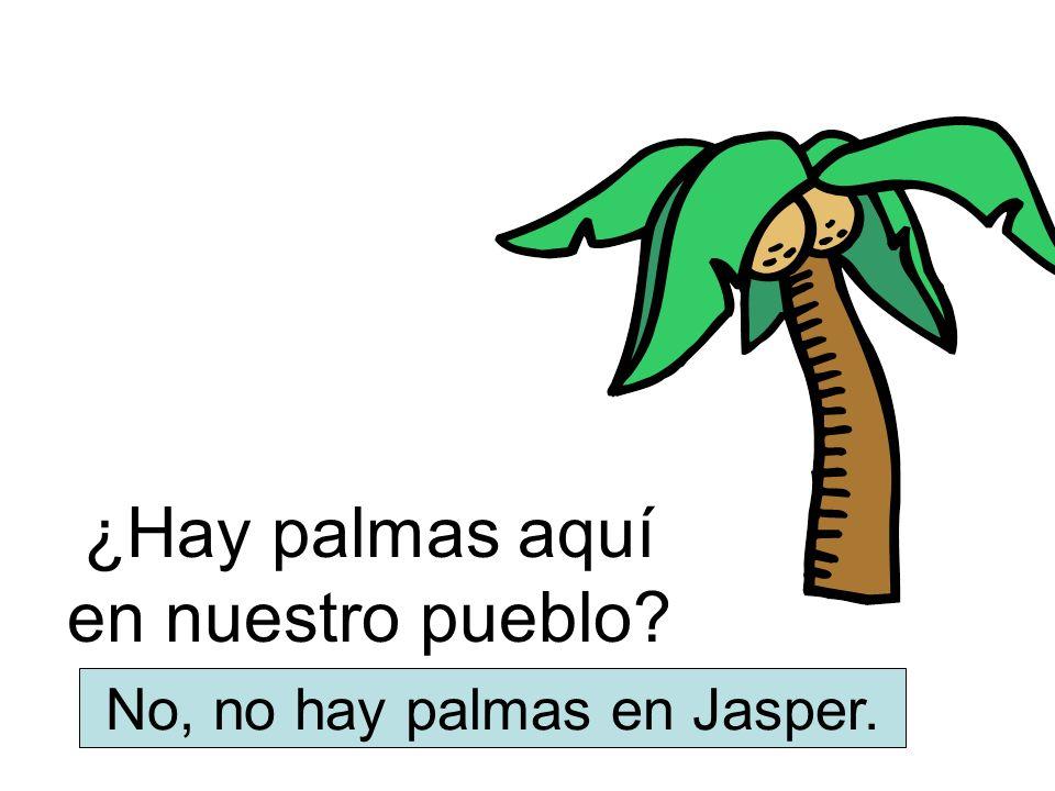 ¿Hay palmas aquí en nuestro pueblo? No, no hay palmas en Jasper.