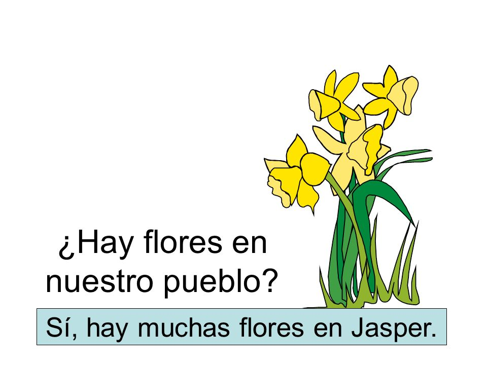 ¿Hay flores en nuestro pueblo? Sí, hay muchas flores en Jasper.