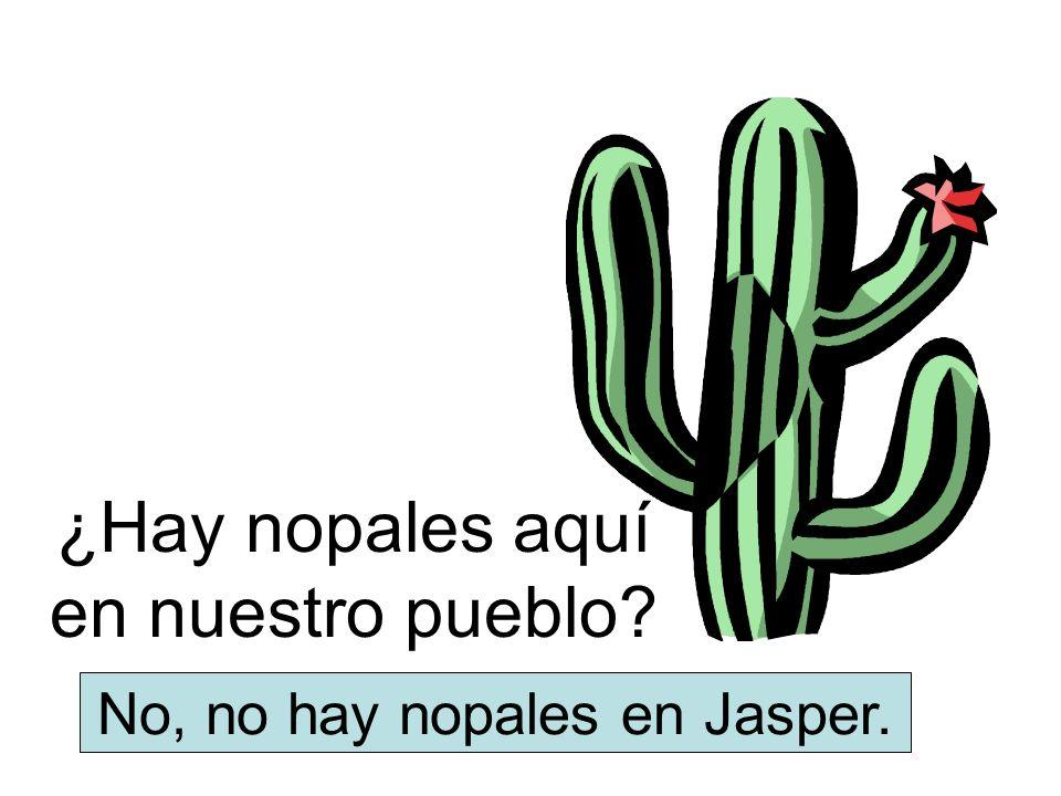 ¿Hay nopales aquí en nuestro pueblo? No, no hay nopales en Jasper.
