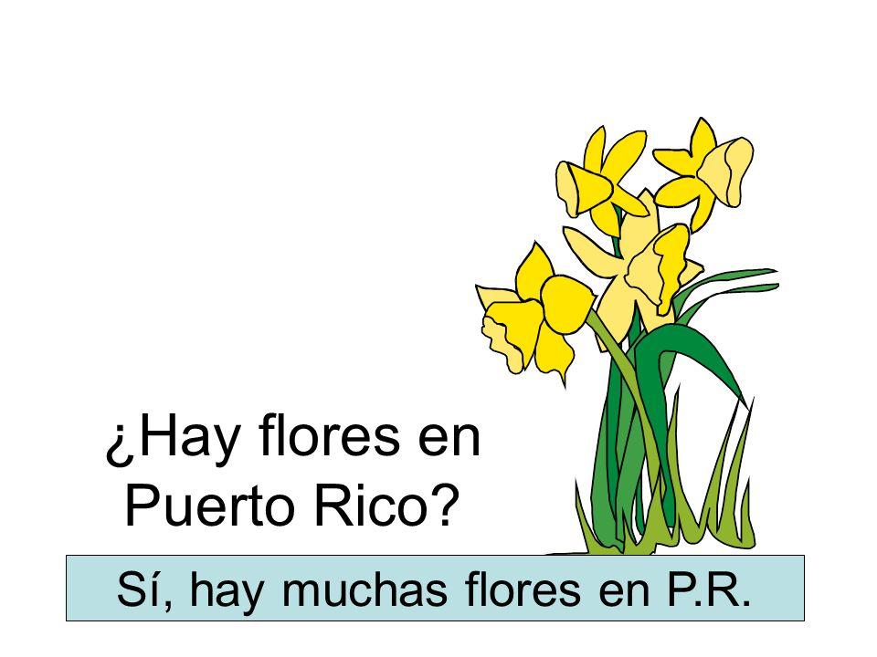 ¿Hay flores en Puerto Rico? Sí, hay muchas flores en P.R.