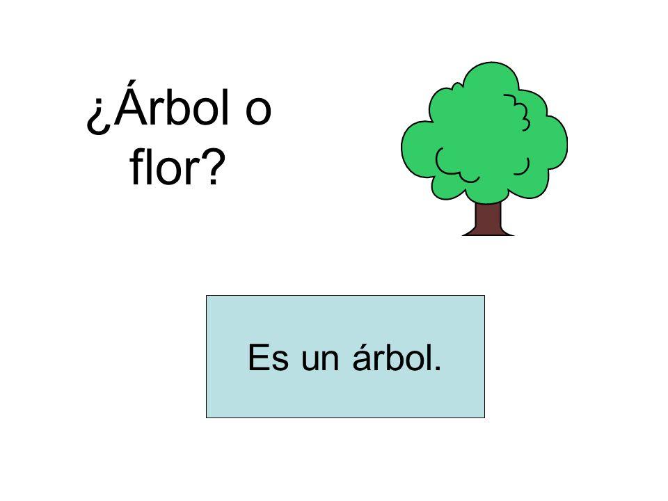 ¿Árbol o flor? Es un árbol.