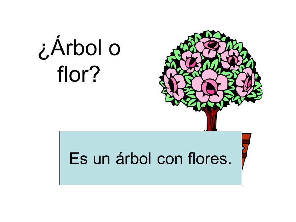 ¿Árbol o flor? Es un árbol con flores.