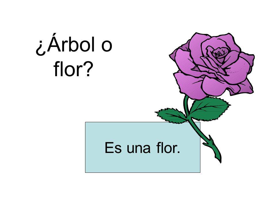 ¿Árbol o flor? Es una flor.
