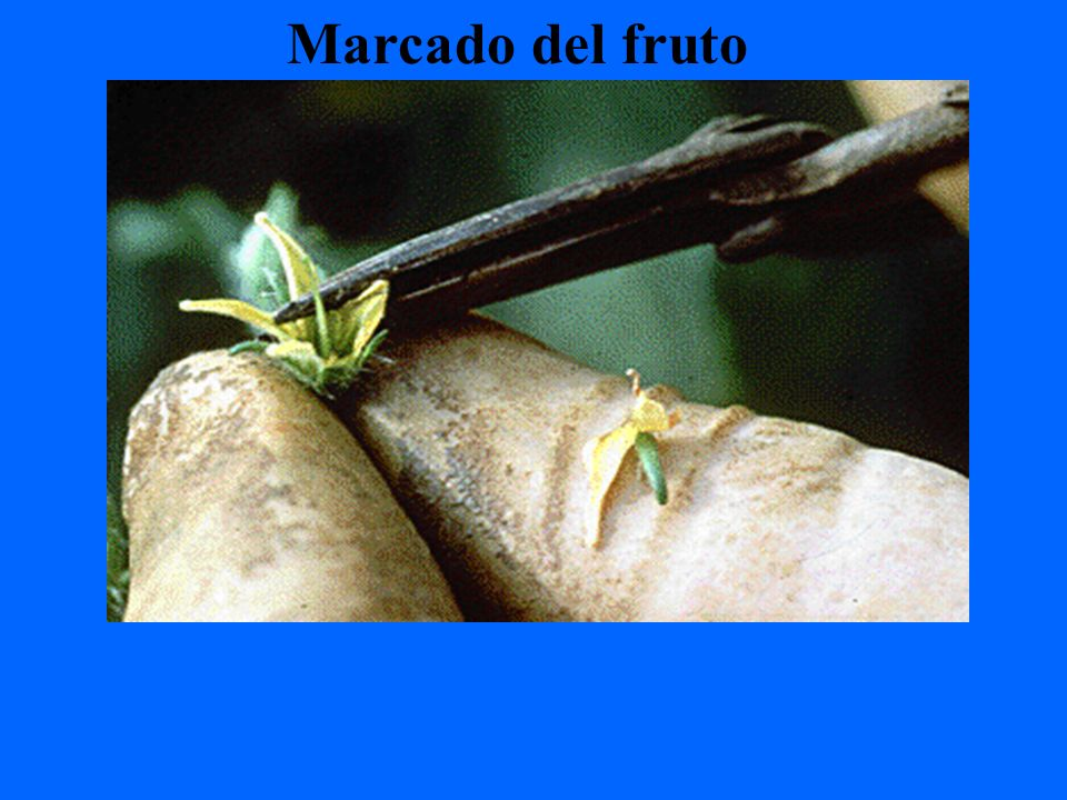 Marcado del fruto