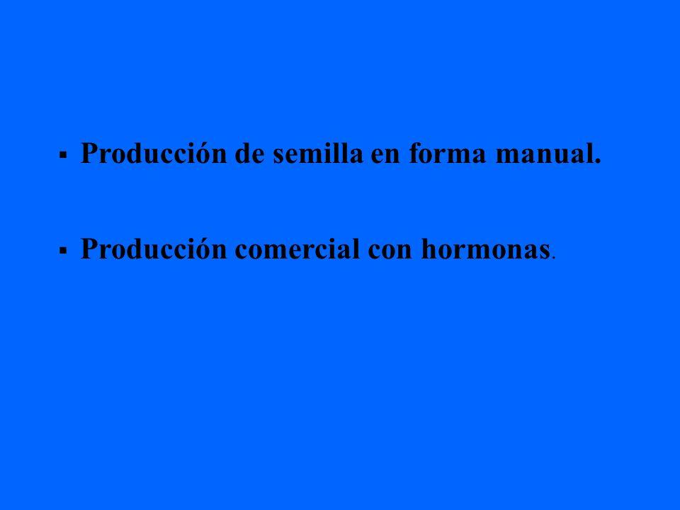 Producción de semilla en forma manual. Producción comercial con hormonas.