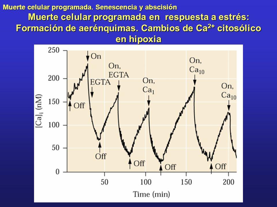 Muerte celular programada. Senescencia y abscisión Muerte celular programada en respuesta a estrés: Formación de aerénquimas. Cambios de Ca 2+ citosól