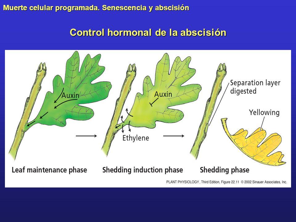 Control hormonal de la abscisión