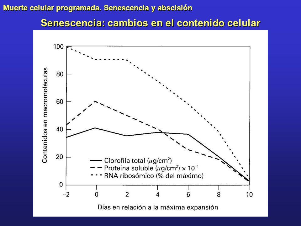Muerte celular programada. Senescencia y abscisión Senescencia: cambios en el contenido celular
