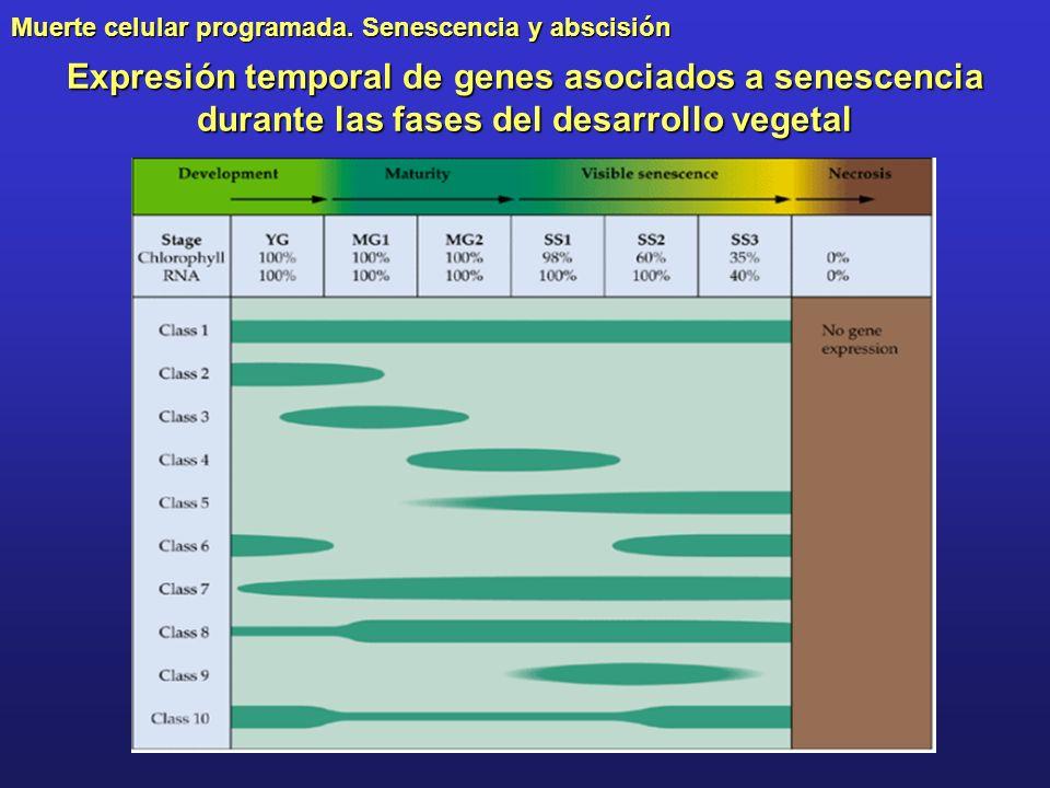 Muerte celular programada. Senescencia y abscisión Expresión temporal de genes asociados a senescencia durante las fases del desarrollo vegetal