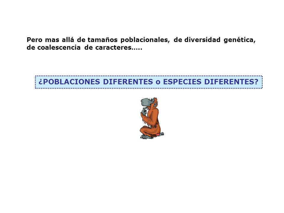 ¿POBLACIONES DIFERENTES o ESPECIES DIFERENTES? Pero mas allá de tamaños poblacionales, de diversidad genética, de coalescencia de caracteres…..