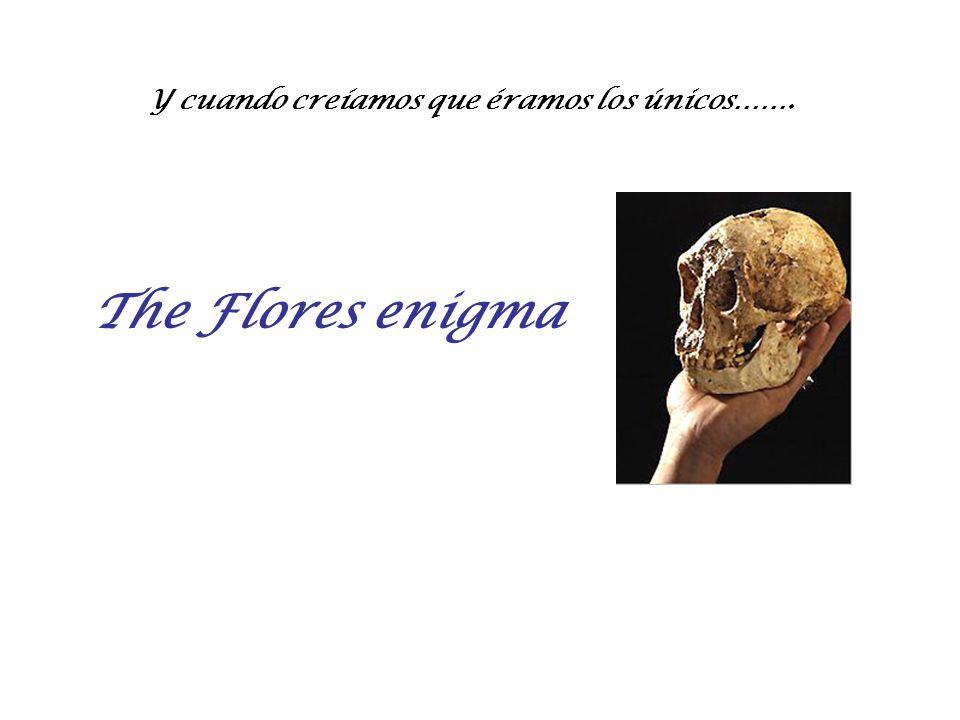 The Flores enigma Y cuando creíamos que éramos los únicos…….