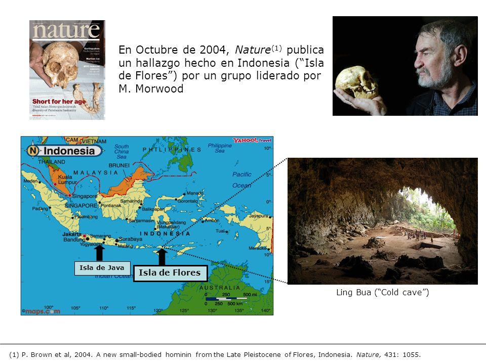 En Octubre de 2004, Nature (1) publica un hallazgo hecho en Indonesia (Isla de Flores) por un grupo liderado por M. Morwood Isla de Java Isla de Flore