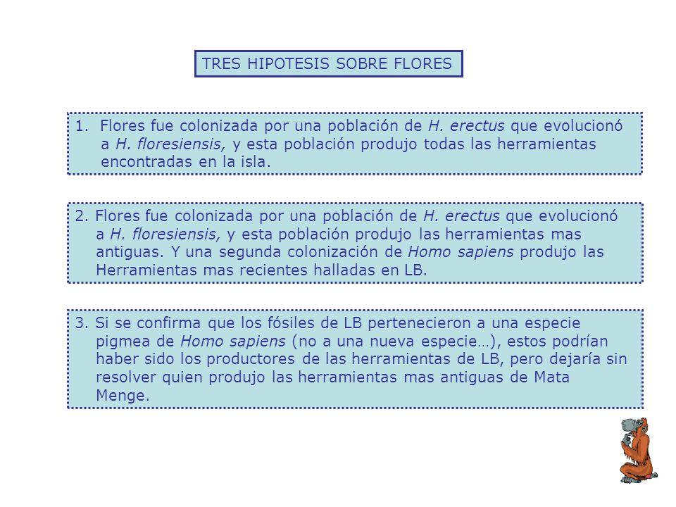 TRES HIPOTESIS SOBRE FLORES 1.Flores fue colonizada por una población de H. erectus que evolucionó a H. floresiensis, y esta población produjo todas l