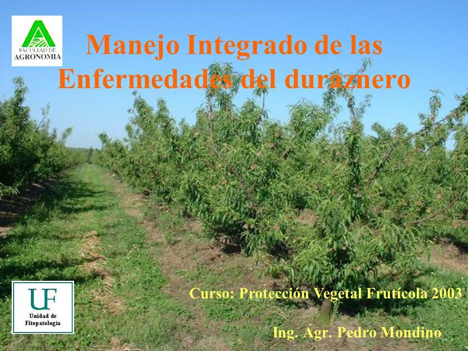 Manejo Integrado de las Enfermedades del duraznero Ing. Agr. Pedro Mondino Curso: Protección Vegetal Frutícola 2003