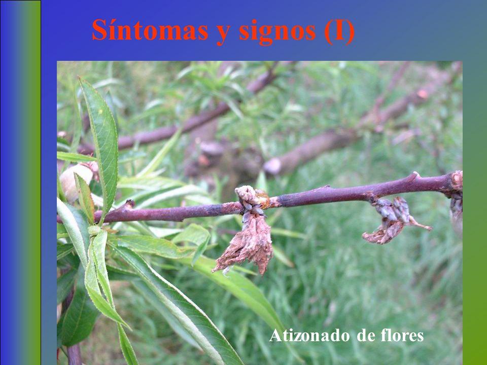 Síntomas y signos (I) Atizonado de flores