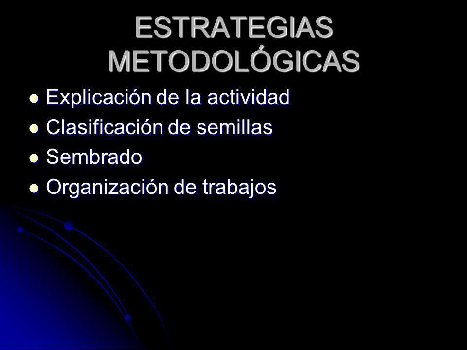 Explicación de la actividad Explicación de la actividad Clasificación de semillas Clasificación de semillas Sembrado Sembrado Organización de trabajos