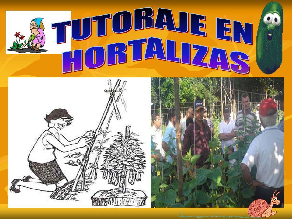 TUTORADO CON ESTACAS