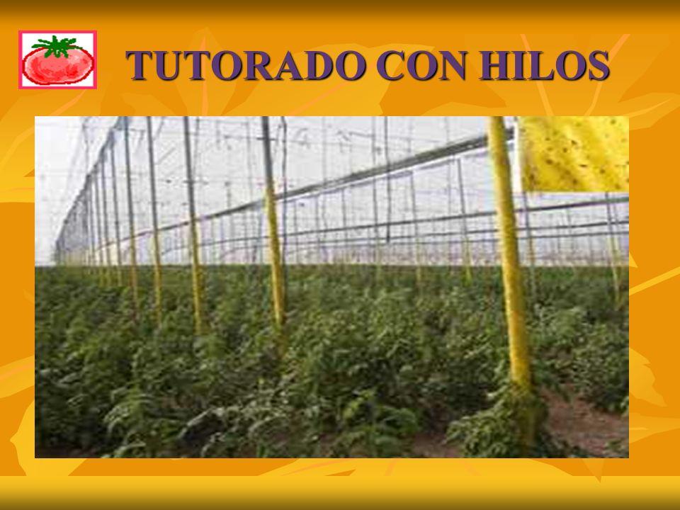 TUTORADO CON HILOS