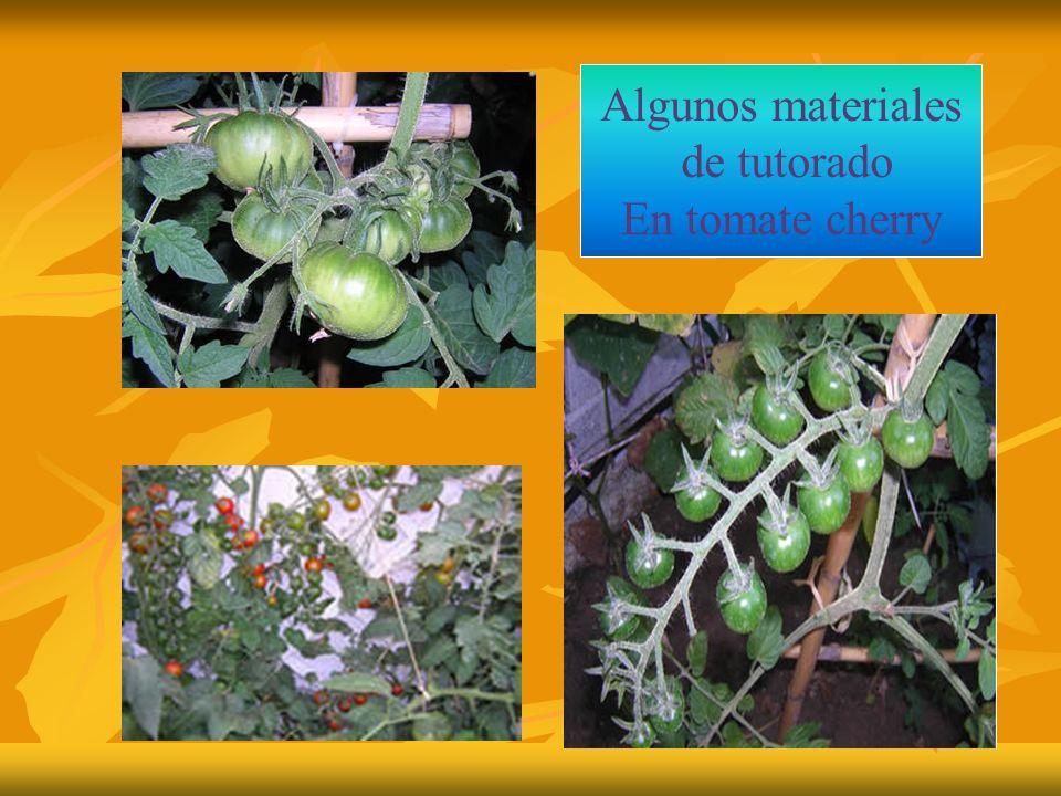 Algunos materiales de tutorado En tomate cherry