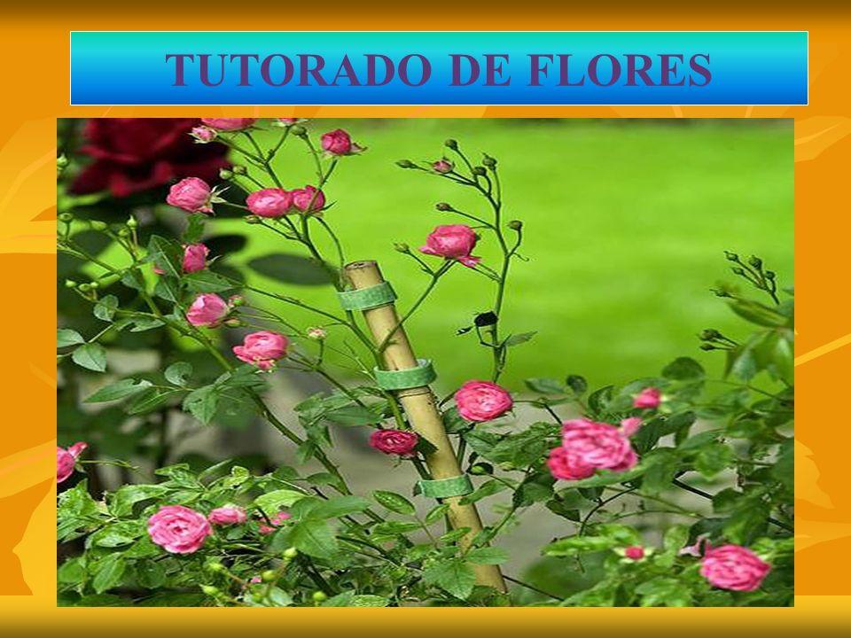 TUTORAJE EN FLORES TUTORADO DE FLORES