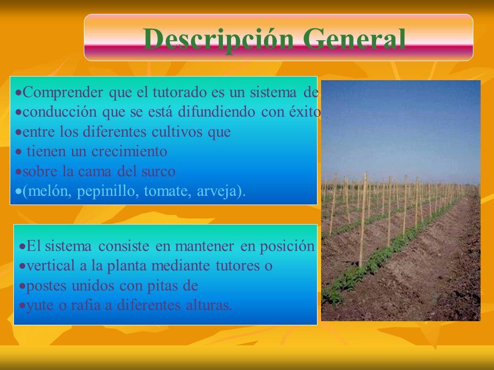 Comprender que el tutorado es un sistema de conducción que se está difundiendo con éxito entre los diferentes cultivos que tienen un crecimiento sobre la cama del surco (melón, pepinillo, tomate, arveja).