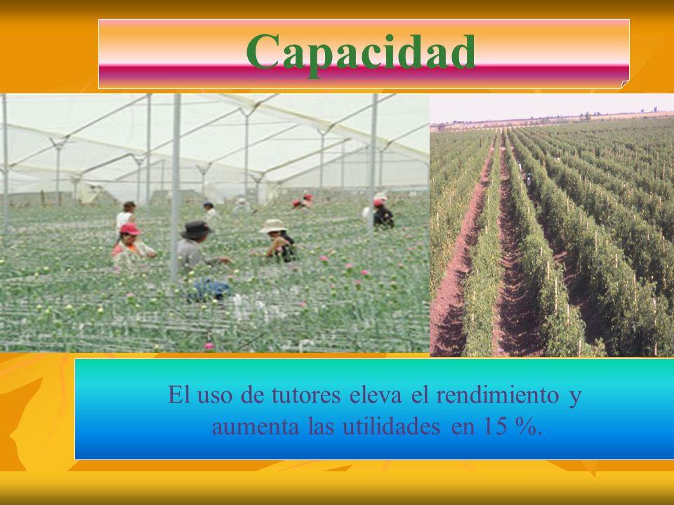 Ventajas: El rendimiento se incrementa.Se aumenta la cantidad de plantas por hectárea.