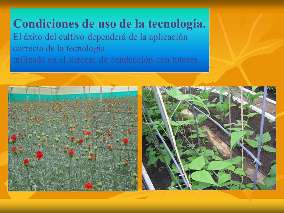 Tutorado en el cultivo de pimiento