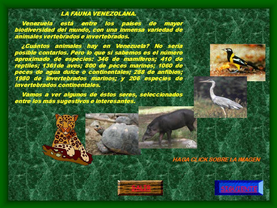 SAMAN Árbol emblemático de los países bolivarianos, destaca por su amplia copa y por elevarse majestuosamente solitario sobre las planicies bajas y cálidas.