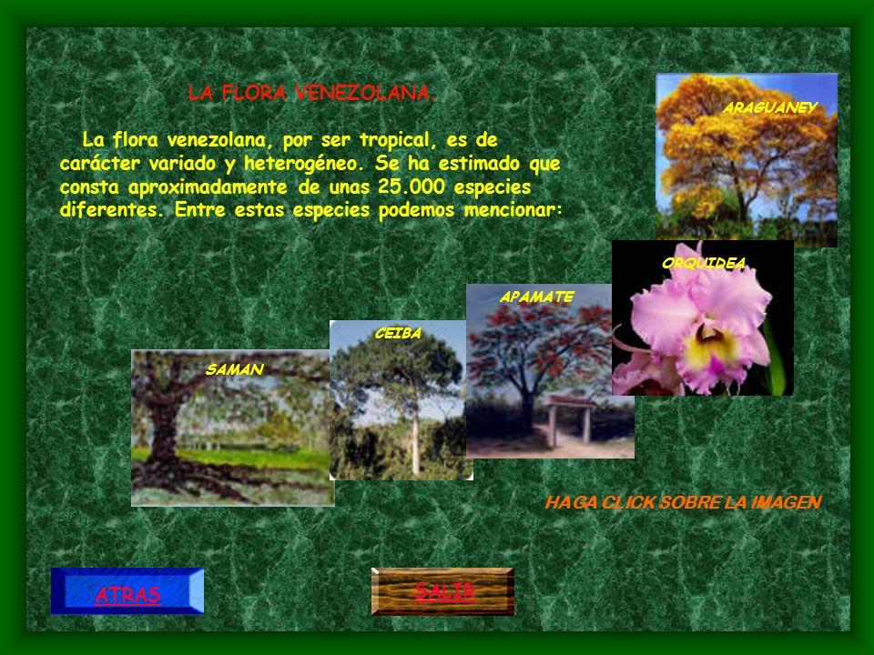 ARAGUANEY Considerada como árbol nacional desde 1.948, destaca por sus flores de color amarillo intenso en plena temporada seca y cuando se ha deshojado.