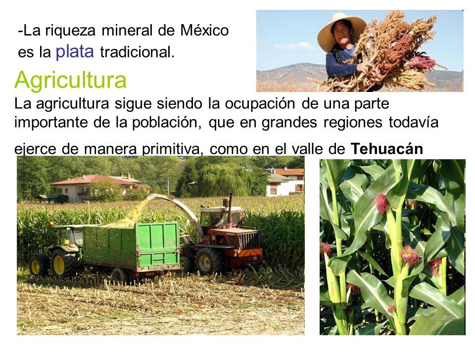 Agricultura La agricultura sigue siendo la ocupación de una parte importante de la población, que en grandes regiones todavía ejerce de manera primitiva, como en el valle de Tehuacán -La riqueza mineral de México es la plata tradicional.