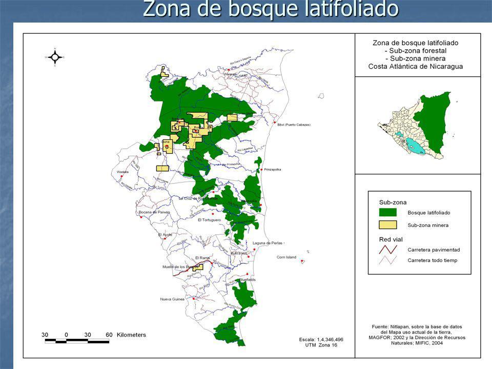 Zona de bosque latífoliado