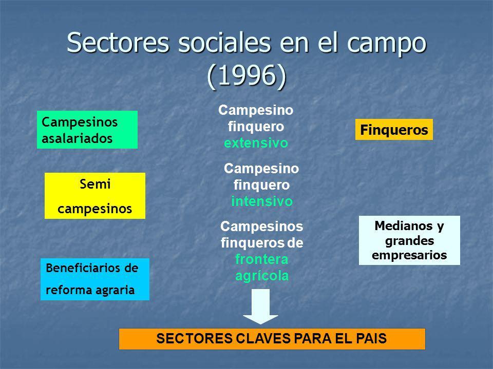 Sectores sociales en el campo (1996) Campesinos asalariados Semi campesinos Campesinos finqueros de frontera agrícola Campesino finquero extensivo Cam