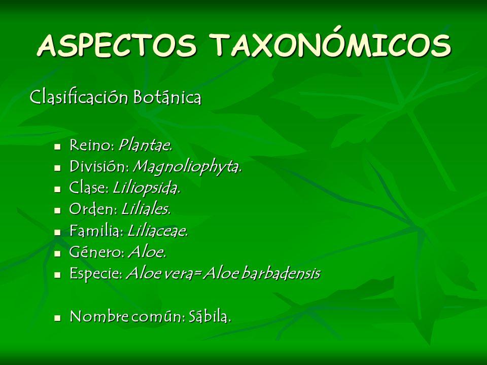 ASPECTOS TAXONÓMICOS Clasificación Botánica Reino: Plantae. Reino: Plantae. División: Magnoliophyta. División: Magnoliophyta. Clase: Liliopsida. Clase