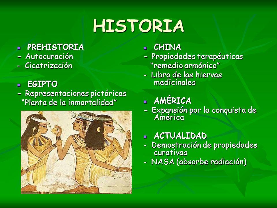 HISTORIA PREHISTORIA PREHISTORIA - Autocuración - Cicatrización EGIPTO EGIPTO - Representaciones pictóricas Planta de la inmortalidad Planta de la inm