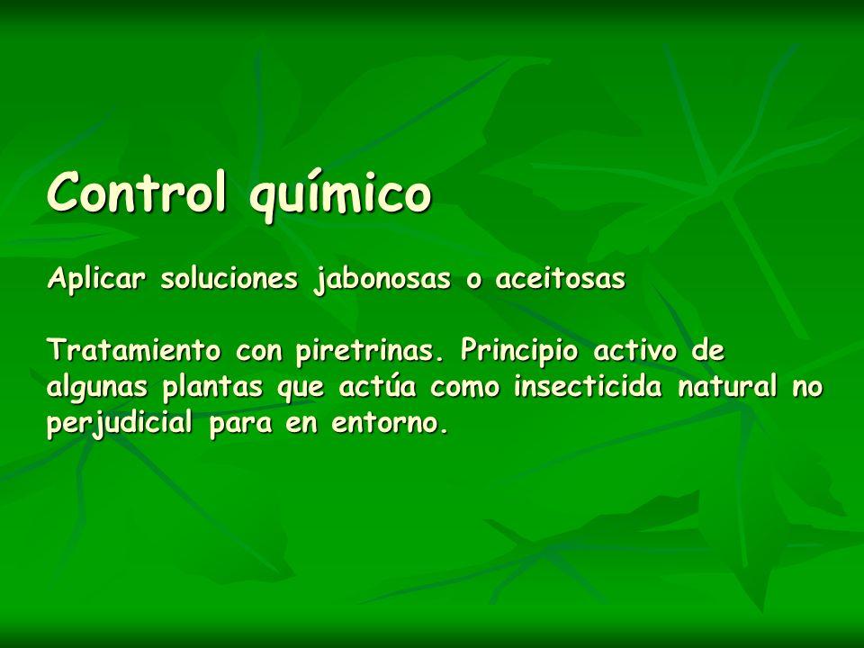 Control químico Aplicar soluciones jabonosas o aceitosas Tratamiento con piretrinas. Principio activo de algunas plantas que actúa como insecticida na