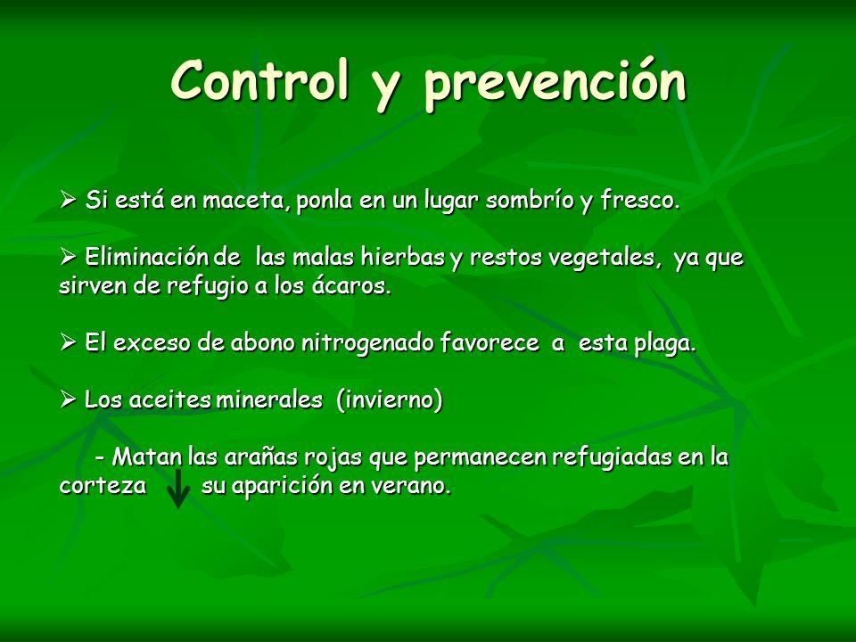 Control y prevención Si está en maceta, ponla en un lugar sombrío y fresco. Si está en maceta, ponla en un lugar sombrío y fresco. Eliminación de las