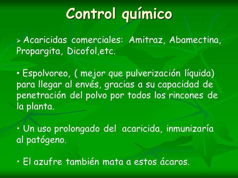 Control químico Acaricidas comerciales: Amitraz, Abamectina, Propargita, Dicofol,etc. Espolvoreo, ( mejor que pulverización líquida) para llegar al en