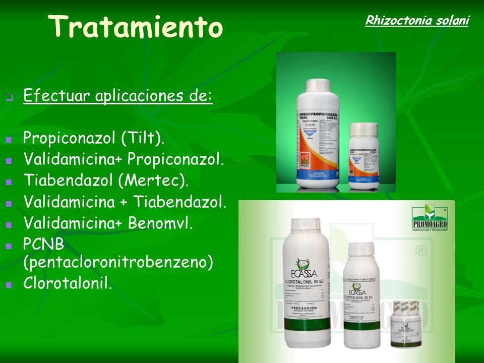 Tratamiento Efectuar aplicaciones de: Propiconazol (Tilt). Validamicina+ Propiconazol. Tiabendazol (Mertec). Validamicina + Tiabendazol. Validamicina+