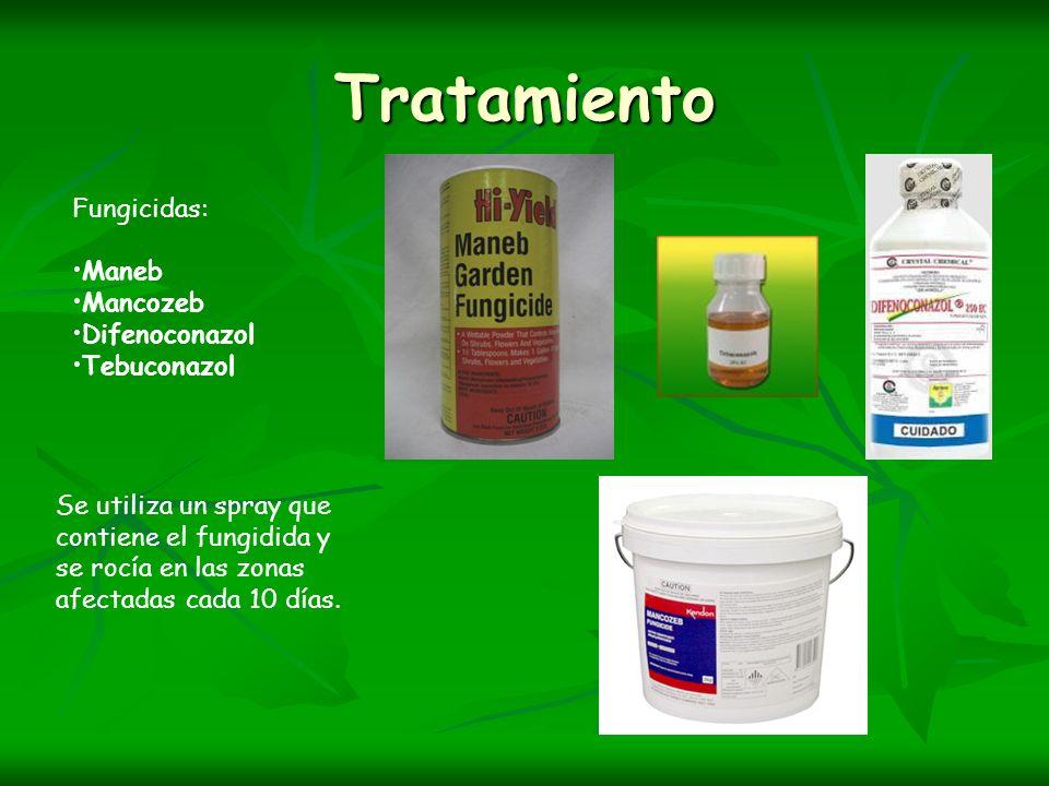 Tratamiento Fungicidas: Maneb Mancozeb Difenoconazol Tebuconazol Se utiliza un spray que contiene el fungidida y se rocía en las zonas afectadas cada
