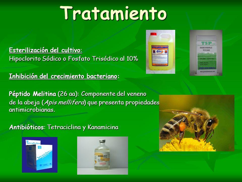 Tratamiento Esterilización del cultivo: Hipoclorito Sódico o Fosfato Trisódico al 10% Inhibición del crecimiento bacteriano: Péptido Melitina (26 aa):