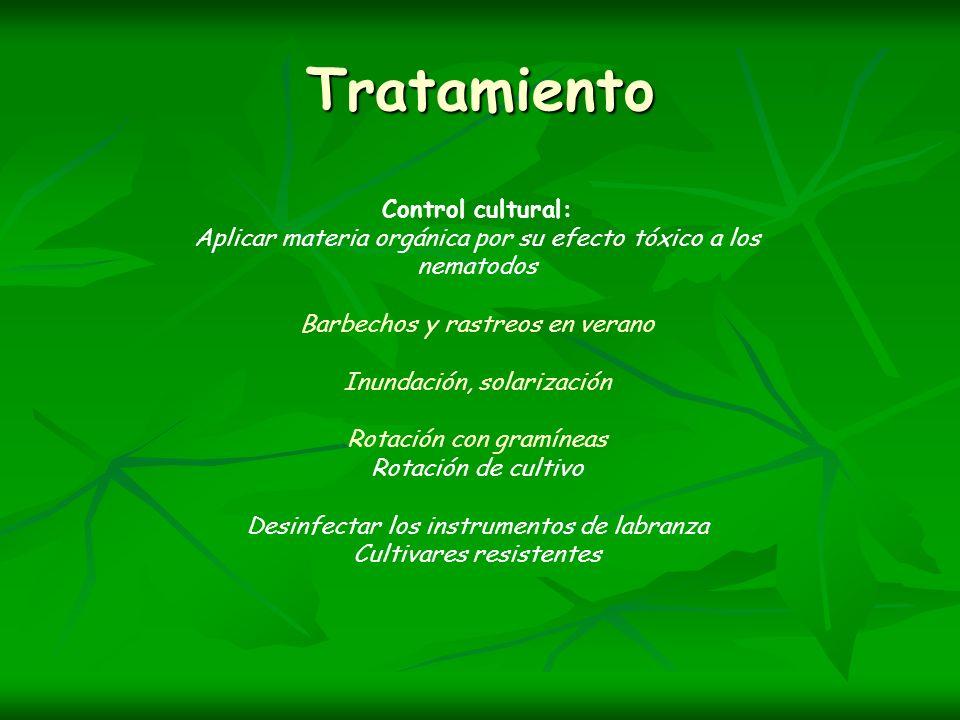 Tratamiento Control cultural: Aplicar materia orgánica por su efecto tóxico a los nematodos Barbechos y rastreos en verano Inundación, solarización Ro