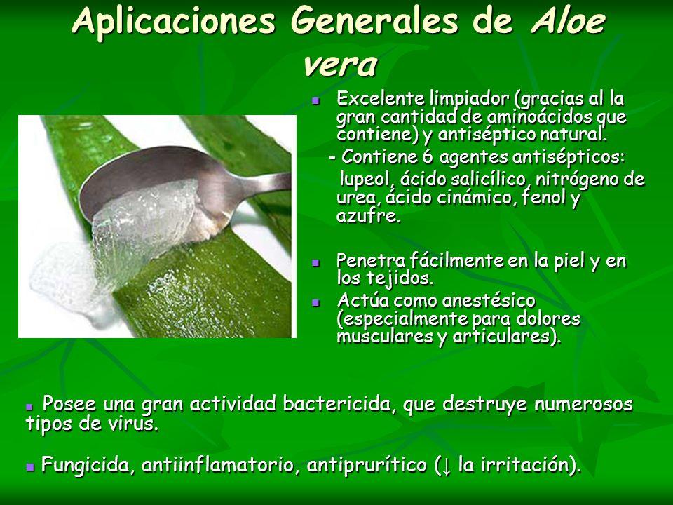 Aplicaciones Generales de Aloe vera Excelente limpiador (gracias al la gran cantidad de aminoácidos que contiene) y antiséptico natural. Excelente lim